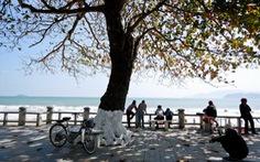 Nha Trang mùa cây bàng lá đỏ