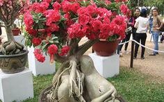 Long đong cây sứ hoa hồng