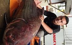 """Cá hô """"khủng"""" nặng 135kg dài 1,8m của Campuchia """"đến"""" TP.HCM"""