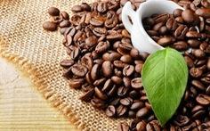 Sản lượng cà phê Brazil ước tính giảm mạnh trong năm nay