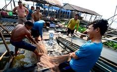 Xuất khẩu thủy sản giảm thê thảm, cá tôm đi đâu?