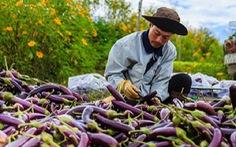 Tiêu thụ nông sản: tích cực tìm thị trường mới
