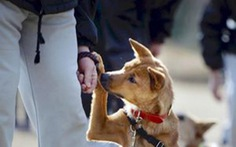 Nhật: rèn trẻ hư bằng chó hoang