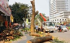 Công bố hàng loạt vi phạm trong vụ chặt cây xanh Hà Nội