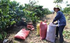 Gạo, cà phê, cao su tuột dốc, xuất khẩu ế