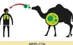 Tăng cường kiểm dịch động vật để phòng chống MERS-CoV