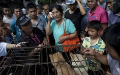 Cô giáo chi 1.100 USD cứu 100 con chó sắp bị giết