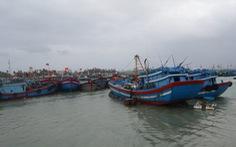 Huyện đảo Lý Sơn cầu cứu ngừng tận diệt tôm cá