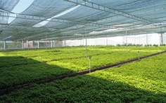 Mở rộng vùng trồng cây hoàn ngọc, phát triển thêm nhiều sản phẩm chất lượng