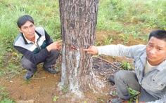 Bắt bảo vệ rừng đầu độc 2,6 hectarừng