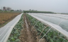 Chủ động chống úng cho cây trồng