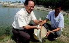 Sẽ xuất khẩu cá chình VN