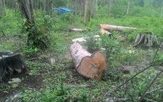 Khoét ruột rừng Phú Quốc - Kỳ 1:Rừng trống như sân banh