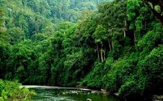 """Thừa Thiên-Huế thực hiện dự án """"Rừng mưa nhiệt đới"""""""