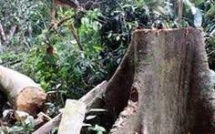Mưa dông, cây ngã đè chết 2 người ở Phú Quốc