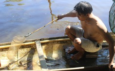 Cá chết cả tạ trên sông Vĩnh Định