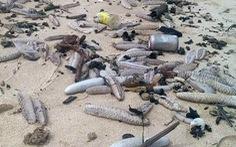 Hàng ngàn hải sâm dạt vào bờ, nguy cơ gì?