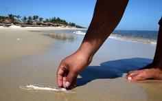 Hải sâm lại dạt vào bờ biển Thuận An, dân hốt đem bán