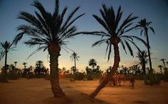 Du ngoạn trên lưng lạc đà ở Palm Grove