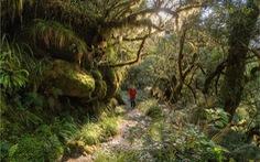 Milford Trail - con đường huyền thoại của New Zealand
