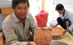Mở rộng diện tích trồng lúa dược liệu