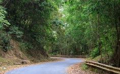 Phát hiện nhiều loài thực vật mới tại Hòn Bà, Khánh Hòa