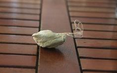 Một thiếu niên đưa cước câu cá vào niệu đạo