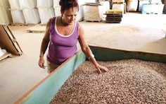 Mexico lai tạo thành công giống đậu mới giàu axít folic