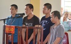 Bốn lâm tặc đốn hạ cây sa mu quý hiếm lãnh 4-6 năm tù