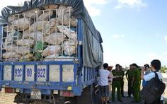 Xe tải chở hơn 9 tấn xương thối để làm bột nêm
