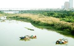 Có một mùa cỏ lau bên bờ sông Hồng