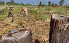 Tăng quyền lợi, gắn trách nhiệm cho chủ rừng Tây Nguyên