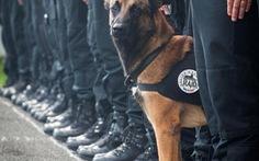 """Chú chó """"truy bắt"""" khủng bố Paris được xem như anh hùng"""