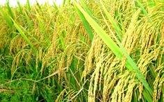 Xuất miễn phí hơn 2.000 tấn hạt giống