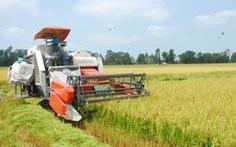 Phê duyệt phương án cánh đồng lớn đến 66.000ha