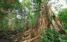 Làm đường xuyên rừng Cát Tiên chưa có ý kiến của Thủ tướng