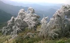 Quảng Ninh: Gia súc chết vì lạnh; Sapa: thiệt hại cây trồng