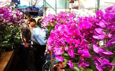 Lan hồ điệp, địa lan Hàn Quốc ồ ạt đổ về Sài Gòn