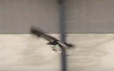 Luyện đại bàng săn máy bay không người lái
