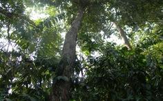 Bạn đọc phát hiện thêm gần chục cây vấp ở Sài Gòn?
