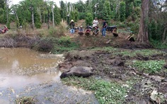 Một voi rừng con chết cạnh nhà dân