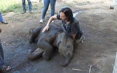 Xem video voi con nhõng nhẽo, ngồi vào lòng nữ du khách