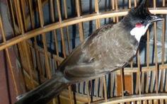 Trộm chim thế nào mới bị xử tội trộm cắp?