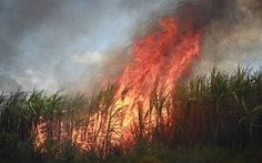 Dân khóc ròng vì mía cháy