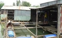 Hàng trăm bè cá chết ở An Giang: hỗ trợ 7-10 triệu đồng/100m3