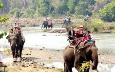 Đề xuất mua voi Thái Lan làm du lịch