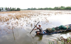GS Võ Tòng Xuân :Không nên đua trồng lúa bằng mọi giá