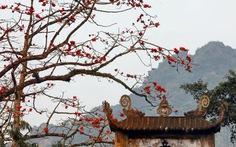 Chùa Hương mùa hoa gạo