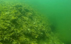 Clip đầu tiên dưới đáy biển Quảng Bình