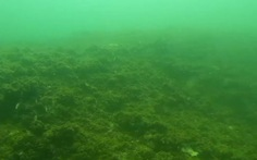 Đoàn công tác môi trường lặn khảo sát biển Quảng Bình